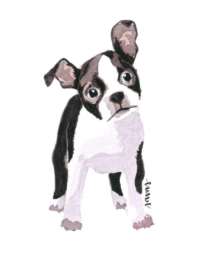 Boston Terrier Isabela Savas