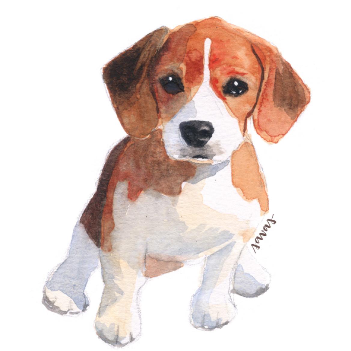 Foxhound Isabel Savas