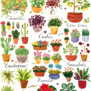 Here are some pot plants